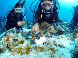 サンゴ受付女性