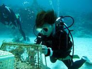 サンゴ植え付け風景